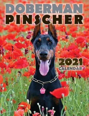 Doberman Pinscher 2021 Calendar Cover Image
