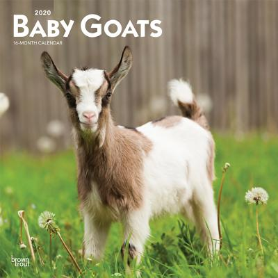 Baby Goats 2020 Square Cover Image