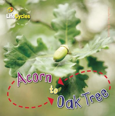 Acorn to Oak Tree (LifeCycles) Cover Image