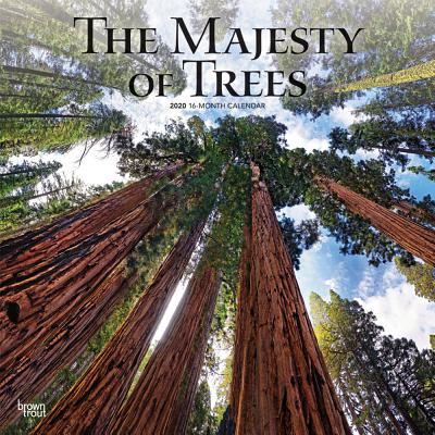 Majesty of Trees, the 2020 Square Cover Image