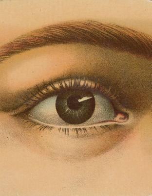 John Derian Picture Book Cover Image