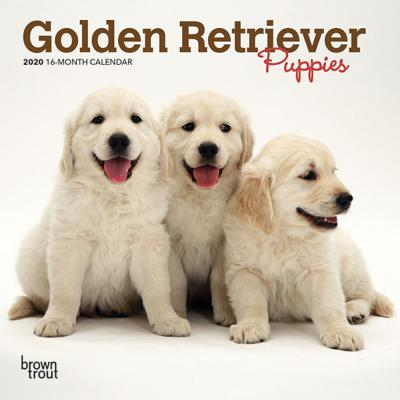 Golden Retriever Puppies 2020 Mini 7x7 Cover Image