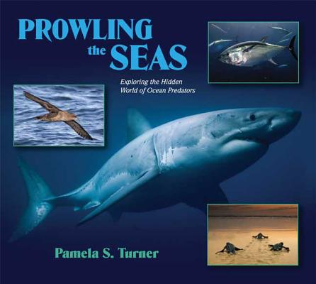 Prowling the Seas Cover