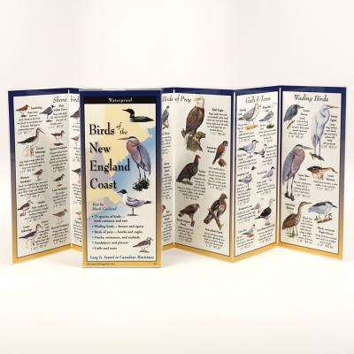Birds of the New England Coast Cover Image