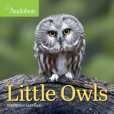 Cover for Audubon Little Owls Mini Wall Calendar 2022