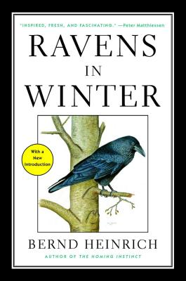 Ravens in Winter Cover Image