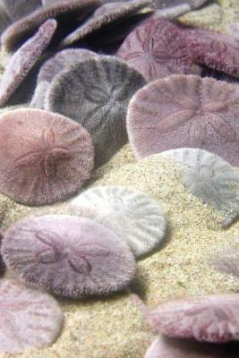 Journal: Sand Dollars Cover Image