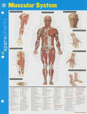 Muscular System Sparkcharts, 44 Cover Image