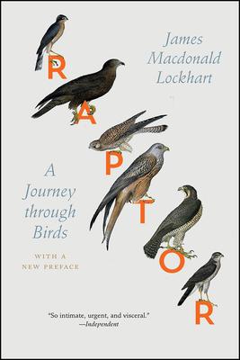 Raptor: A Journey through Birds Cover Image