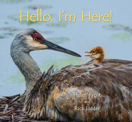 Cover for Hello, I'm Here!