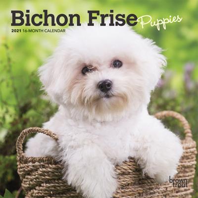 Bichon Frise Puppies 2021 Mini 7x7 Cover Image