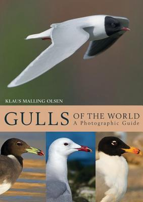 Gulls of the World: A Photographic Guide Cover Image