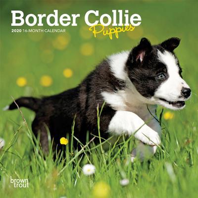Border Collie Puppies 2020 Mini 7x7 Cover Image