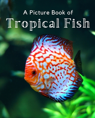 A Picture Book of Tropical Fish: A Beautiful Picture Book for Seniors With Alzheimer's or Dementia. Cover Image