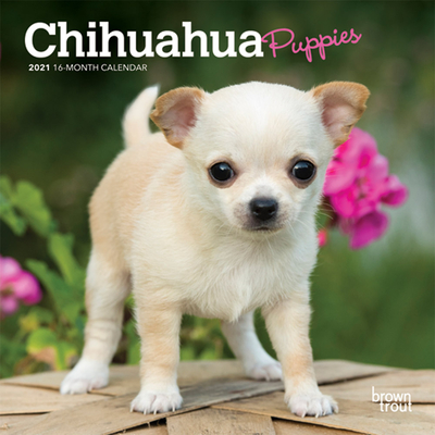 Chihuahua Puppies 2021 Mini 7x7 Cover Image