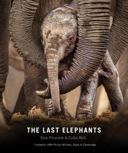 The Last Elephants Cover Image