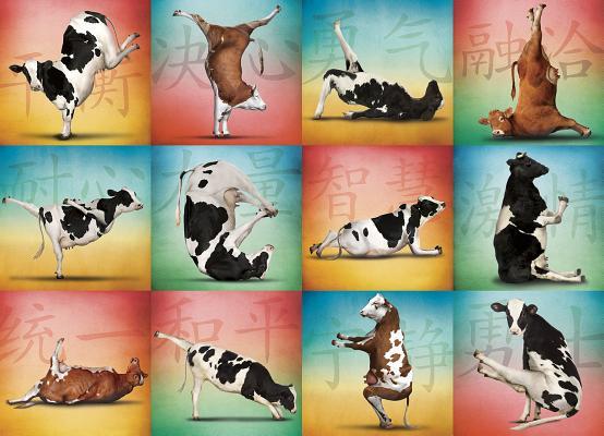 Cow Yoga 1000-Piece Puzzle Cover Image