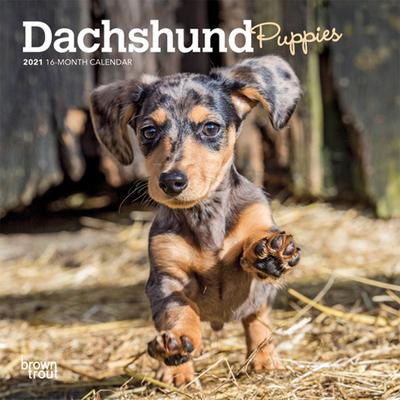 Dachshund Puppies 2021 Mini 7x7 Cover Image