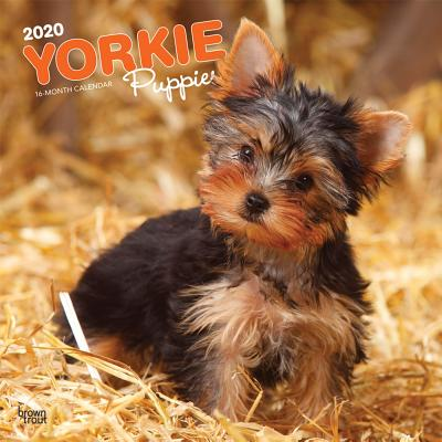 Yorkshire Terrier Puppies 2020 Square Cover Image