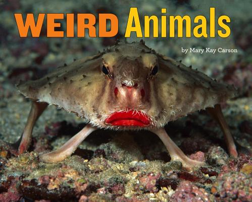 Cover for Weird Animals