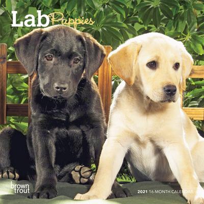 Lab Puppies 2021 Mini 7x7 Cover Image