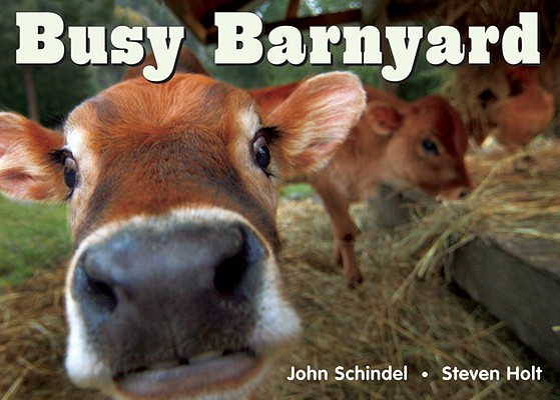 Busy Barnyard Cover