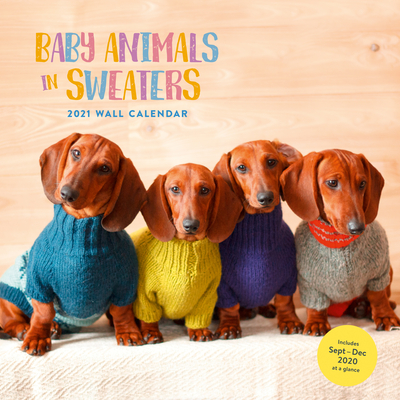 Baby Animals in Sweaters 2021 Wall Calendar: (Cutest Animals Monthly Calendar, Wall Calendar of Cuddly Animals Wearing Sweaters) Cover Image