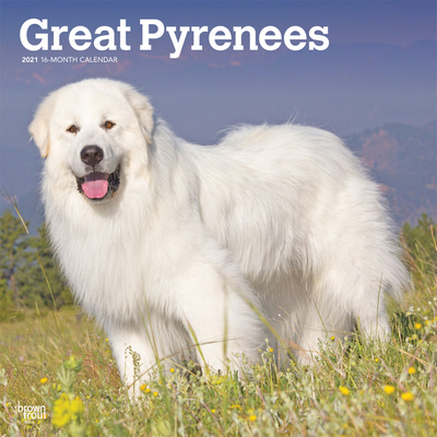 Great Pyrenees 2021 Square Cover Image