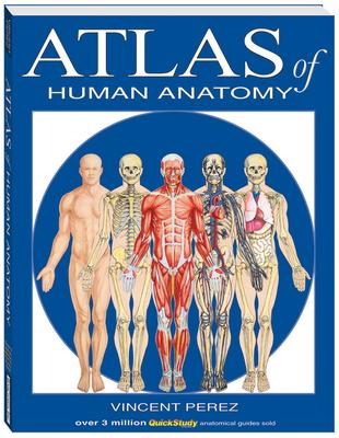 Atlas of Human Anatomy (Quickstudy Books) Cover Image