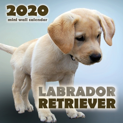Labrador Retriever 2020 Mini Wall Calendar Cover Image