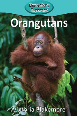 Orangutans (Elementary Explorers #46) Cover Image