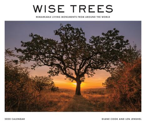 Wise Trees 2020 Wall Calendar: Remarkable Living Monuments from Around the World Cover Image