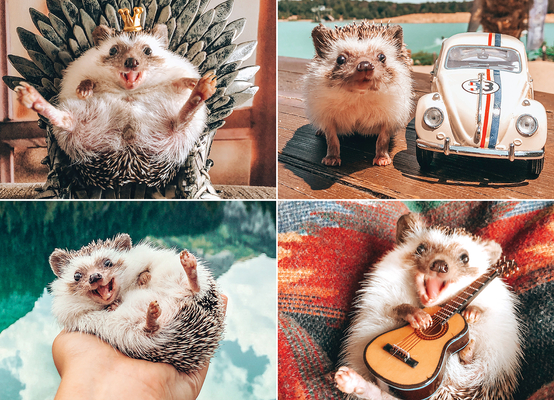Herbee the Hedgehog 1000-Piece Puzzle Cover Image