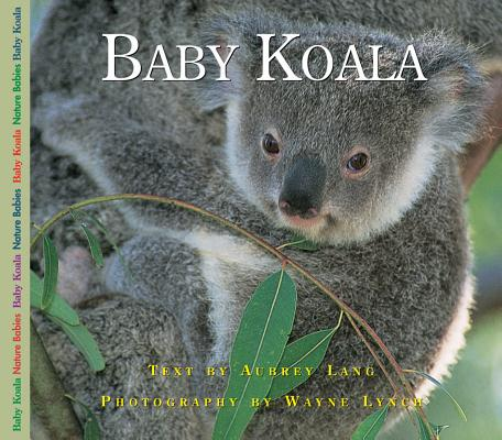 Baby Koala Cover