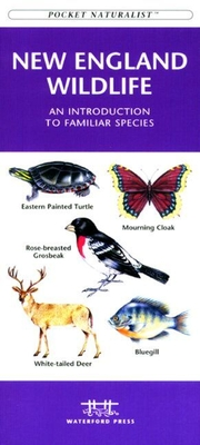 New England Trees & Wildflowers: A Folding Pocket Guide to Familiar Species (Pocket Naturalist Guides) Cover Image