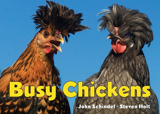 Busy Chickens Cover