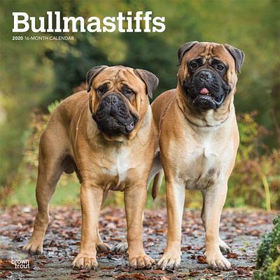 Bullmastiffs 2020 Square Cover Image