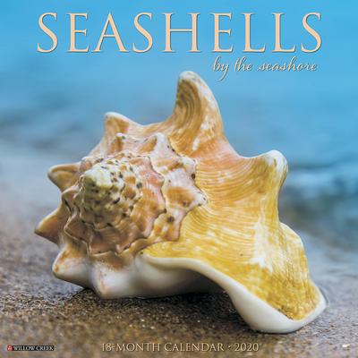 Sea Shells 2020 Wall Calendar Cover Image