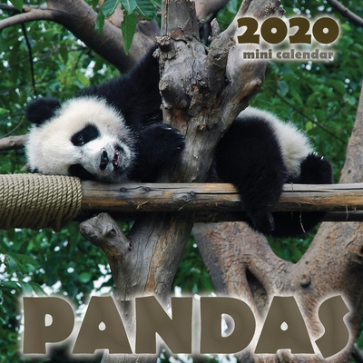 Pandas 2020 Mini Wall Calendar Cover Image