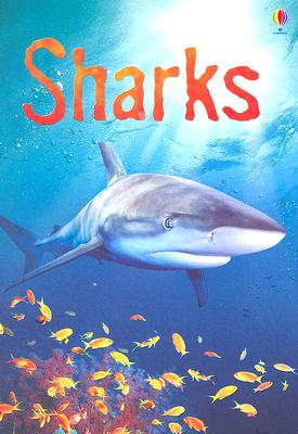 Sharks: Information for Young Readers - Level 1 (Usborne Beginners) Cover Image
