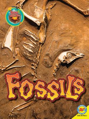 Fossils (Focus on Earth Science) Cover Image