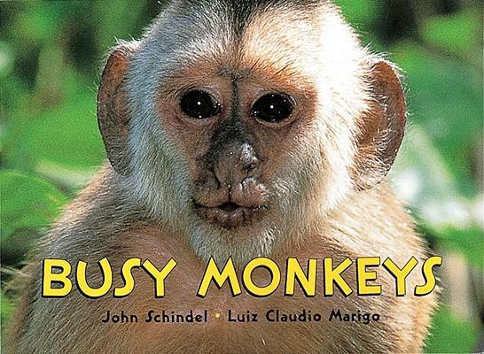 Monkeys! Cover