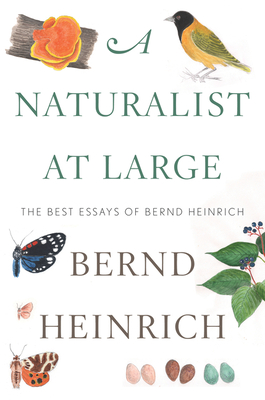 A Naturalist at Large: The Best Essays of Bernd Heinrich Cover Image
