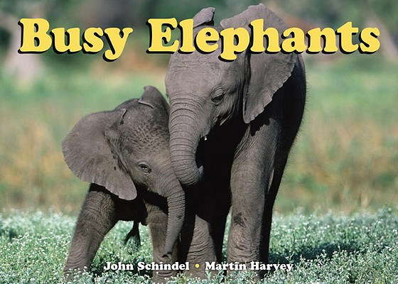 Busy Elephants (A Busy Book) Cover Image