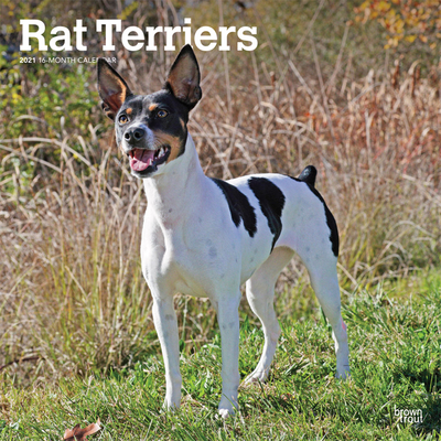 Rat Terriers 2021 Square Cover Image