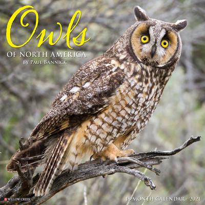 Owls 2021 Wall Calendar Cover Image