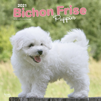 Bichon Frise Puppies 2021 Square Cover Image