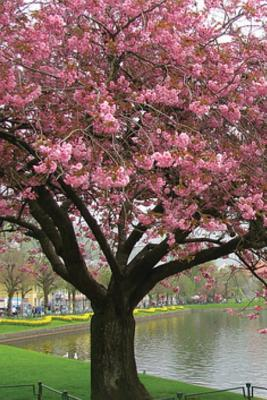 Journal: Spring Tree Cover Image