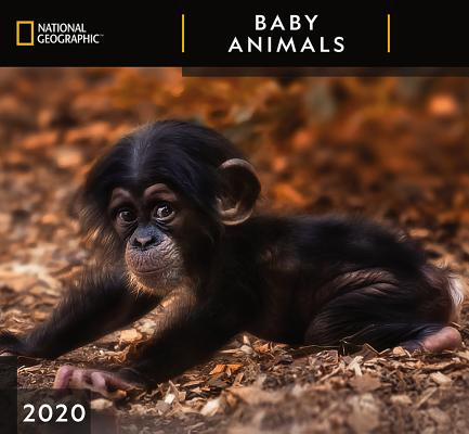 Cal 2020-National Geographic Baby Animals Wall Cover Image