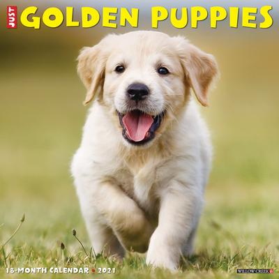 Just Golden Puppies 2021 Wall Calendar (Dog Breed Calendar) Cover Image